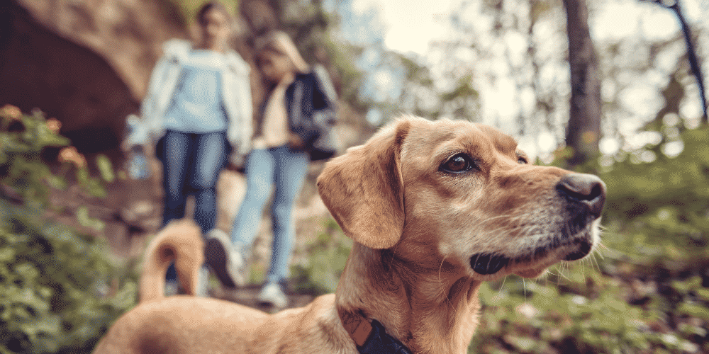 Cleaning up dog poop on trails